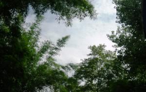 【邛崃图片】四川邛崃天台山-楠木溪(路书+随拍)