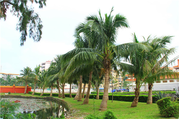 三亚市歌:《请到天涯海角来》三亚市树:酸豆树,椰树三亚市花:三角梅
