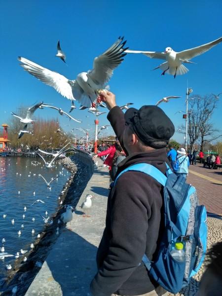 感觉人和海鸥,大自然的风景,和谐在一起了!哈哈