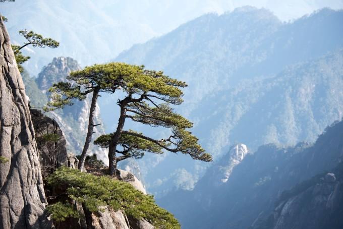 壁纸 风景 树 松 松树 680_454
