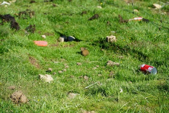 路遇一群出来觅食的小动物,全家总动员呢,应该是老鼠一种,探头探脑,特