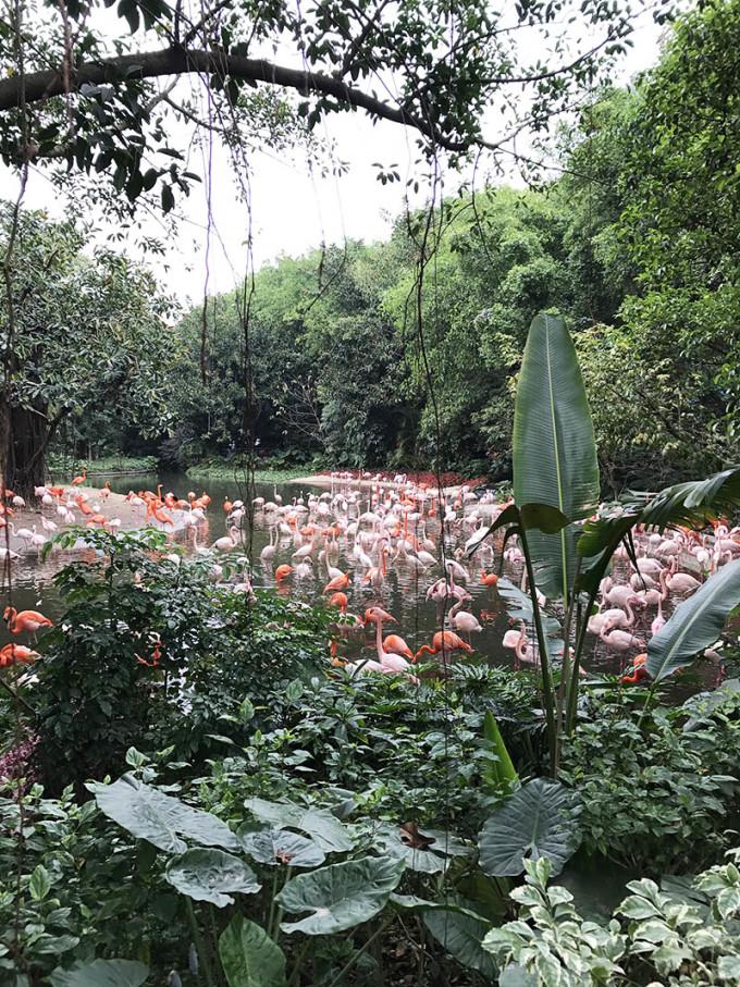 牵你的手我们一起旅行#春节广州动物园之行