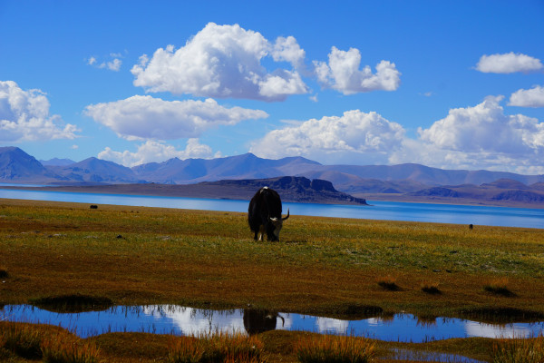 以上照片是2015年阿里行的羊卓雍错,这也是我第二次到羊湖。由于出发的晚,到达羊湖时已经是正午。正午适合观看羊湖湖面(就是观景台的位置),也因为2015西藏大旱,导致羊湖水面下降,居然又在山下羊湖碑向下走的地方出现了雪山倒影(图7)            这是2016年第三次见羊湖的照片,由于今年把普莫雍错加进来,所以我们6点就从拉萨出发,到达羊湖观景台时羊湖的影子都没有。2016西藏雨水大,使得两边的山上色彩显得滋润艳丽加上又是日出前后光线柔和把羊湖衬托的妩媚千姿!9点以前旅游团没有