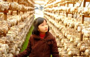 【景宁图片】冬季到畲乡景宁采香菇