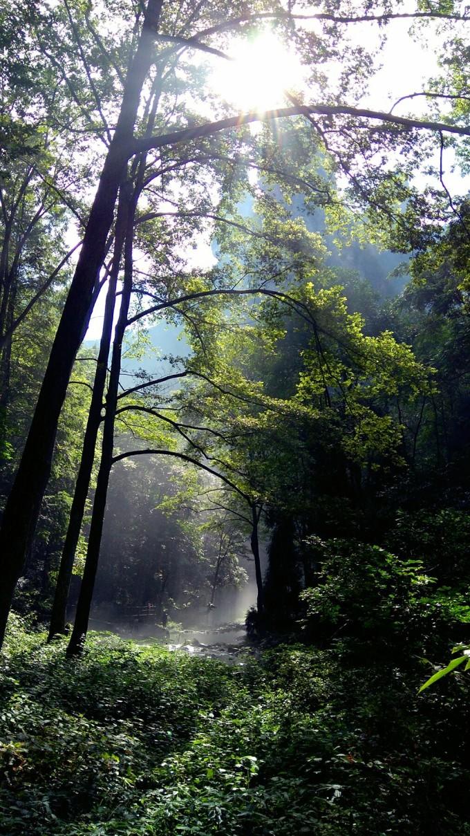 ps制作森林雾气