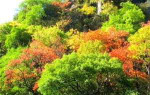 【十堰图片】秋色真的很美-----湖北郧西游!
