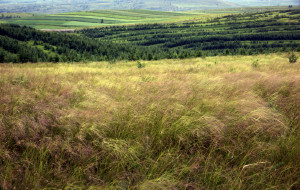 【蔚县图片】草原--梯田。我还会再来