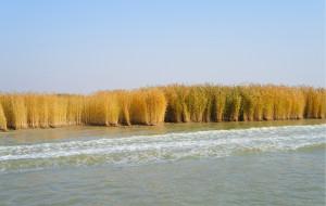 【沙湖图片】金色的童话(银川-额济纳旗)-第二天 沙湖
