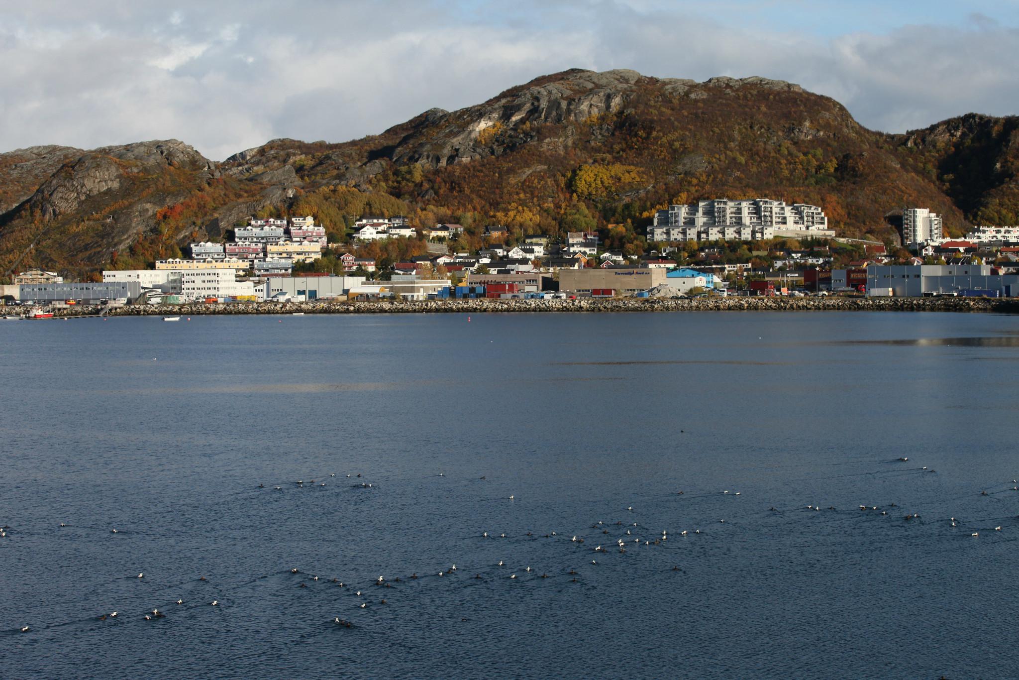 挪威---斯瓦尔巴群岛(北纬79度):深度自游行(7)博德bodo特隆赫姆