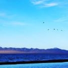 哈拉湖攻略图片