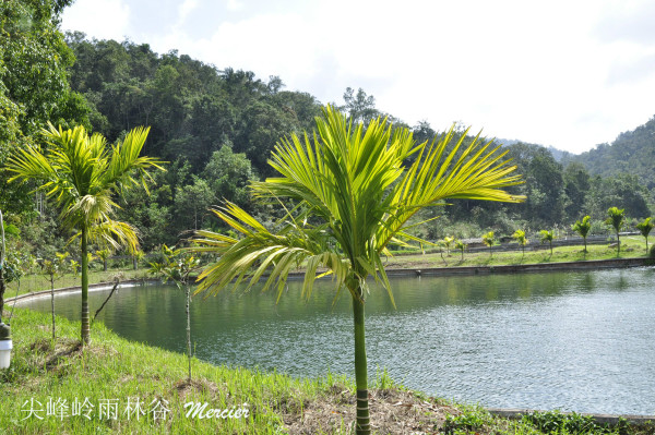 风景 乐东/2012年春节后我也去过尖峰岭。主在雨林谷,风景不错。上一张...