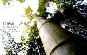 【蜀南竹海图片】竹的海——四川宜宾蜀南竹海徒步行摄记