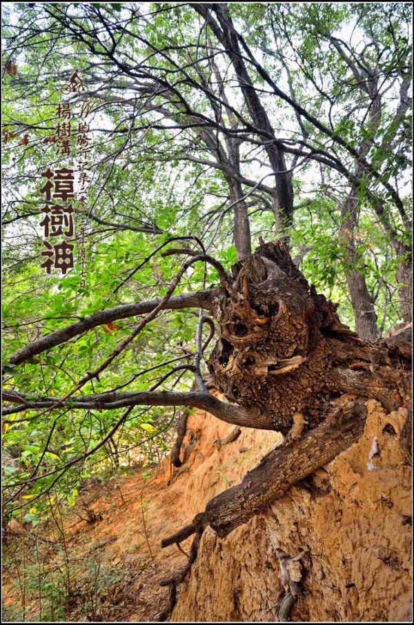 郑州浮戏山杨树沟风景区