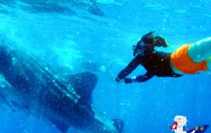 【杜马盖地图片】各种角度看鲸鲨之杜马盖地8日欢乐之旅