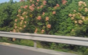 【吴越古道图片】13年国庆太极洞——吴越古道——浙西行