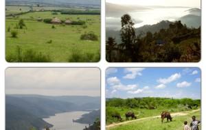 【乌干达图片】大猩猩的召唤 - 走进乌干达