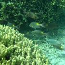 西沙群岛攻略图片