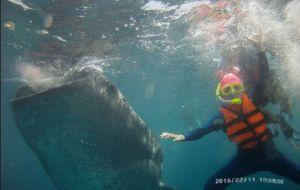 """【杜马盖地图片】【杜马盖地(也称""""杜马格特"""")、APO岛、苏米龙岛和鲨鱼共舞10天自由行】"""