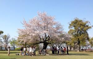 【广岛市图片】2014春季日本北九州11天游