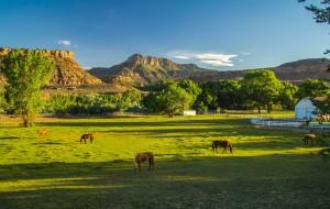 【锡安国家公园图片】37天全家跟团、自驾美国游第八篇,西部自驾游(六) 锡安国家公园