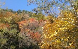 【蓝田图片】身边的红叶之旅-蓝田玉山一日游