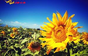 【甘肃图片】牵娃潇洒踏西北(4+2西游组绕青海湖大环线9天快乐行)