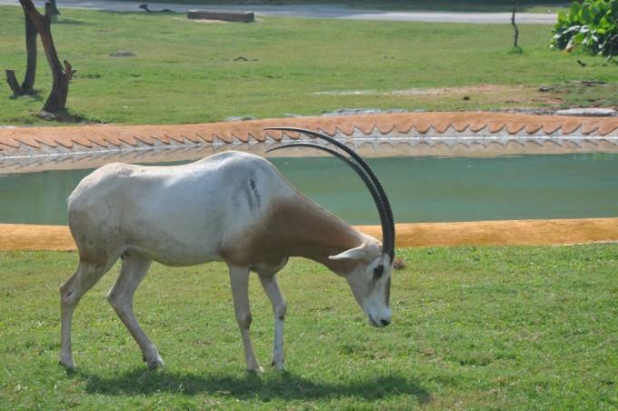 接下来来到的就是最萌的动物居住地考拉园,长隆是中国大陆唯一可以