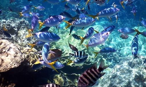壁纸 海底 海底世界 海洋馆 水族馆 桌面 510_306