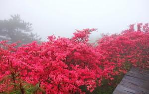 【黄冈图片】快去看看麻城杜鹃花海吧