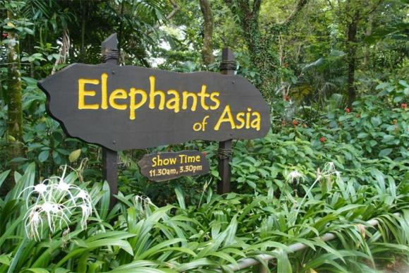 新加坡动物园日间门票(含游园车)
