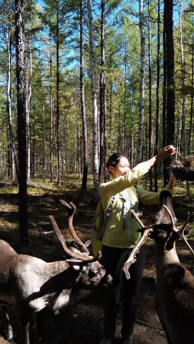驯鹿靠吃森林中的苔藓生存.