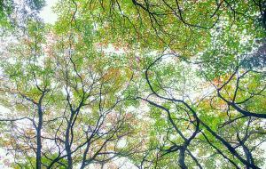 """【柳江图片】逃离""""尘""""都 去这里看雪景 住树屋 整个森林都被我承包啦"""