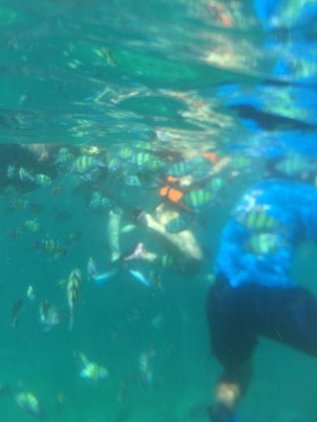 壁纸 海底 海底世界 海洋馆 水族馆 桌面 450_600 竖版 竖屏 手机