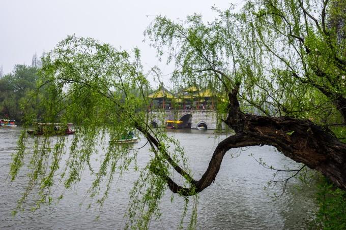 壁纸 垂柳 风景 柳树 摄影 树 桌面 680_453