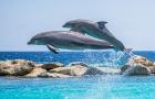 【经典必玩】毛里求斯 快艇追海豚、七色土、鸟公园一日游