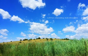 【约翰内斯堡图片】左手温柔了岁月  右手惊艳了时光「彩虹之国South Africa遇见美好」
