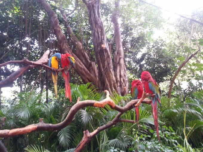 广州长隆野生动物园和鳄鱼公园实用攻略