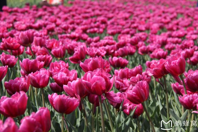 北京国际鲜花港,花的世界,花的海洋