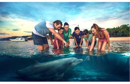 澳大利亚旅游 黄金海岸 布里斯班 摩顿海豚岛一日游