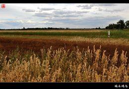 【原创摄影】行摄张北——张北坝上草原