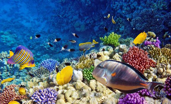 壁纸 海底 海底世界 海洋馆 水族馆 桌面 580_352