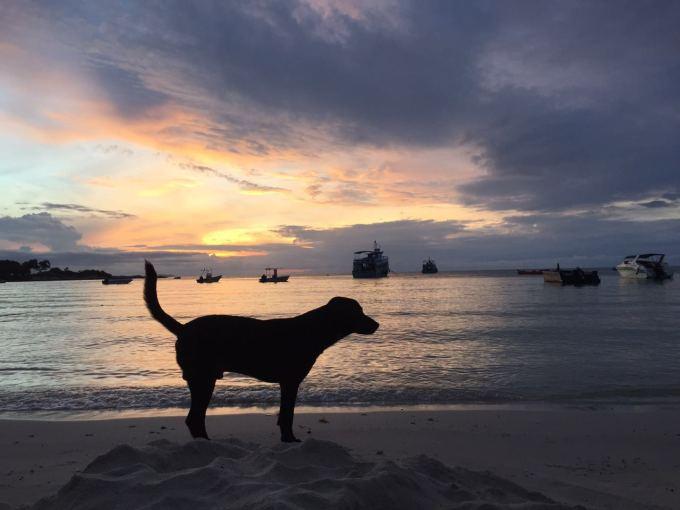 --> 一、出游路线的选择。 因为工作原因,只有十一放假才能有机会进行长一点时间的旅行,所以过年刚才普吉岛回来就在计划十一得目的地。也是因为刚从泰国回来,最先排除的就是泰国。从马来西亚的亚庇、仙本那,到菲律宾的棉兰老、长滩岛,以及塞班、帕劳,这些岛屿都作为备选在某程或某牛等网站上关注过,综合线路、费用等原因(主要是荷包不满),一直没有选中。直到在某程上发现了一个泰国的曼谷-芭提雅-沙美岛的自助线路,在网站上可以自助选择航班、酒店,眼前豁然一亮,马上说服自己:再去一次泰国也是可以的。于是,第一时间向老婆汇