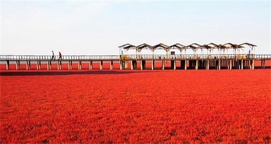 【大连出发 独家线路】盘锦红海滩一日游(红海滩廊道