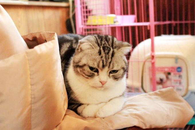 壁纸 动物 猫 猫咪 小猫 桌面 680_454