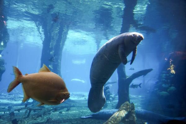珠海长隆 | 徜徉梦幻海洋世界