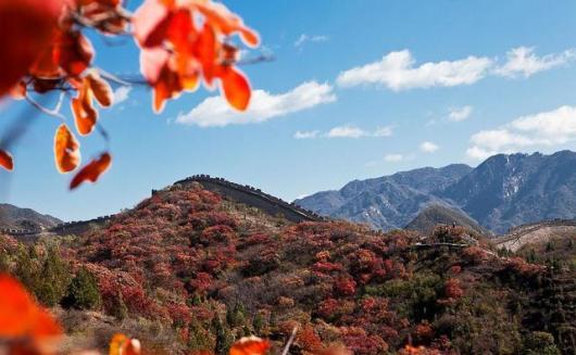 【1日京郊赏秋】亚洲最大红叶风景区—【红叶岭】,八达岭长城卧龙谷