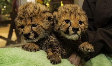 【快速出票】加州圣地亚哥野生动物园 (san diego zoo
