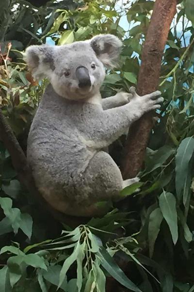 世界各国国宝在内的460余种20000余只珍惜动物