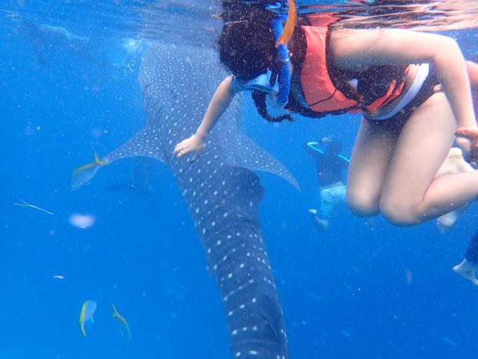 和鲸鲨一起,所以兴奋中带有一点点小紧张,因为我们回程还是从宿务飞的