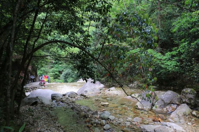 隐藏在浙南山区的原始森林——十里叠锦箬寮,松阳旅游